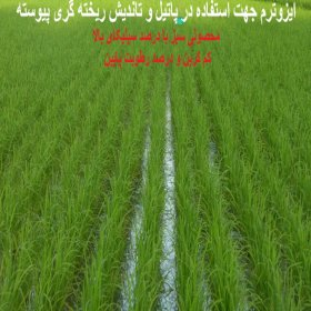 سبوس برشته برنج